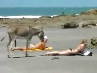 Na plaży osioł też człowiek